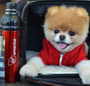 The Cutest Dog Increases Virgin America´s Engagement image